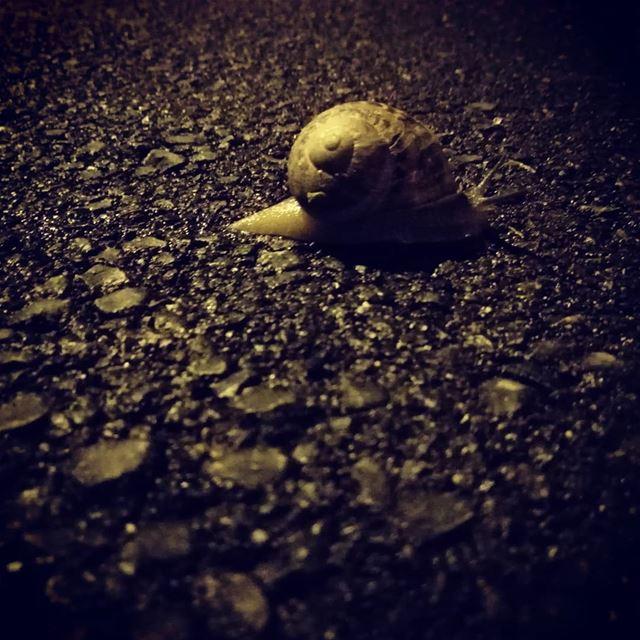 Mindfulness... 🐌 happyhap snailsofinstagram ...