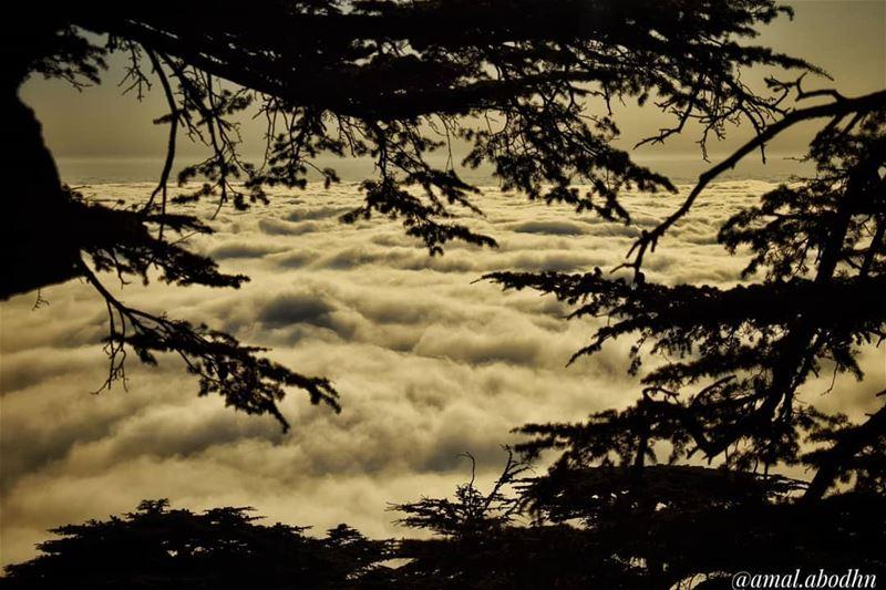 الباروك... جمالٌ بلا تجميل 🌍.... lebanon photography ... (محمية أرزة الباروك)