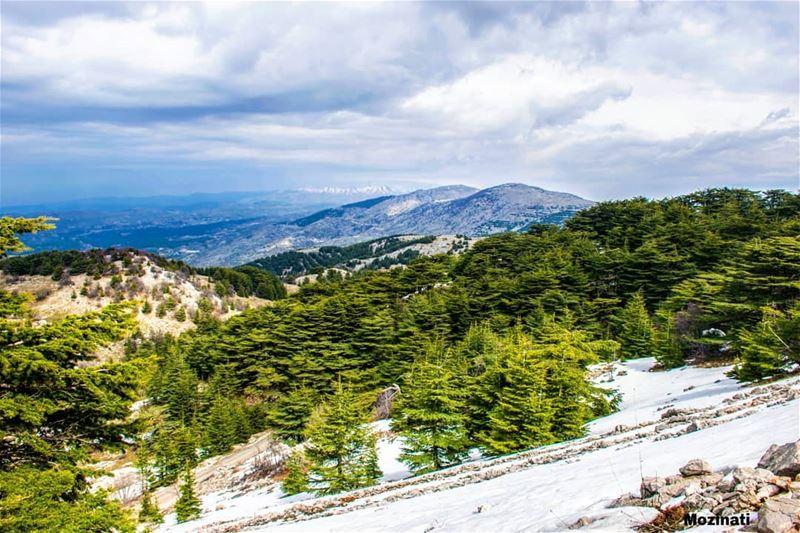 يا ناطرين الثلج ما بدكن ترجعوا صرخ عليهن بالشتي يا ديب بلكي بيسمعوا.. ==== (Bâroûk, Mont-Liban, Lebanon)