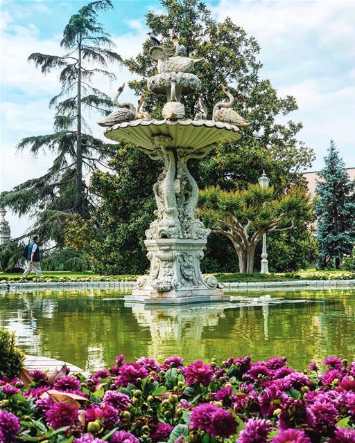 - Swan Lake 🦢-..... turkey liveloveistanbul positivevibes ... (Dolmabahçe, Istanbul, Turkey)