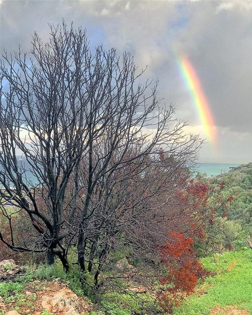 Rainbow 🌈 natureoftheplanet1 proudlylebanese lebanoninapicture ...