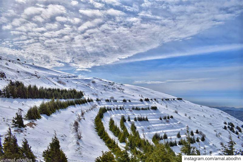 الباروك ❄ ☀ 🌲 ...... lebanon photography photographylovers ... (Bâroûk, Mont-Liban, Lebanon)