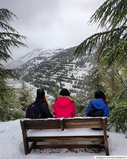 Shouf Cedar snowshoeing now 🍃.🌲🌲🌲🌲🌲🌲🌲🌲🌲🌲🌲🌲🌲🌲.... (Chouf)