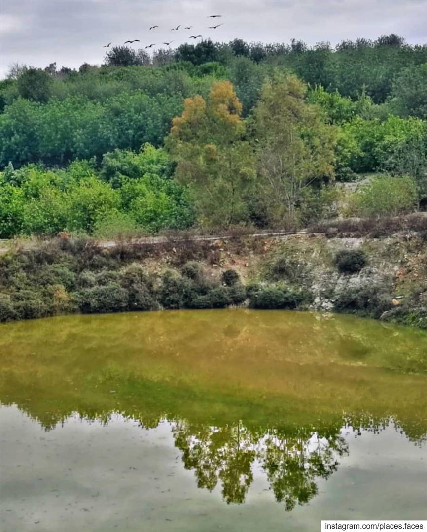 أينما يحل الأخضر، يضفي على خلفيّته جمالاً، فجمال الطبيعة خُلق للأخضر لا سِو (Ghassâniye, Al Janub, Lebanon)