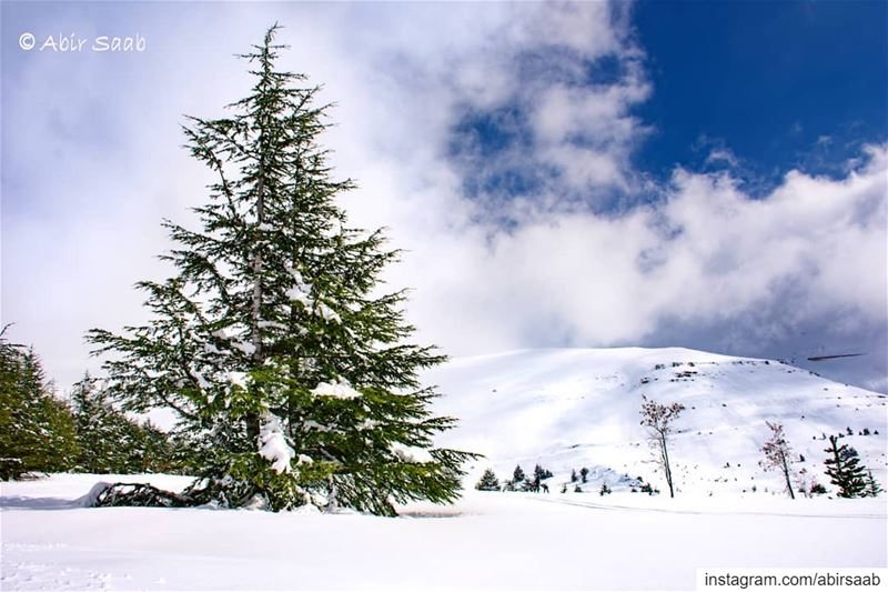 Despite all I have seen and experienced, I still have the same thrill out... (Cedars of God)