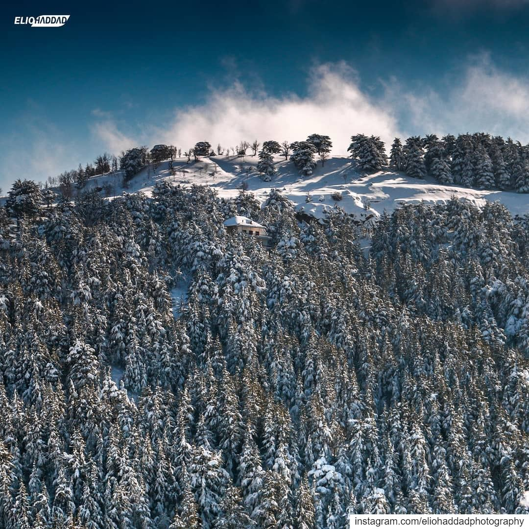 Lebanon 🇱🇧 LiveLoveLebanon LiveLoveBeirut Snow White Nature Sky ... (Hadath El Jebbeh - Bcharré)