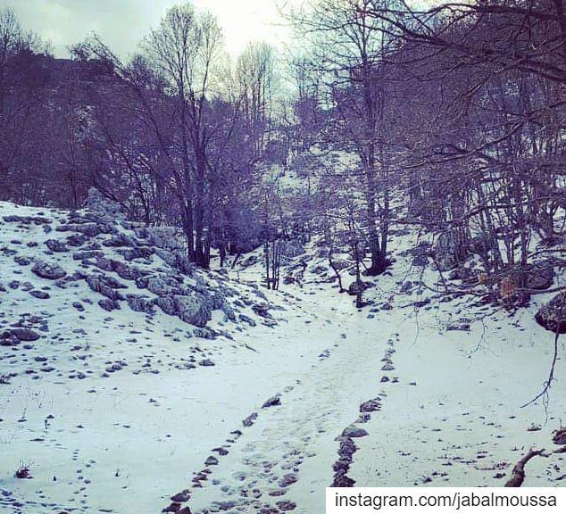 Let it snowLet it snowLet it snow JabalMoussa unescomab unesco ... (Jabal Moussa Biosphere Reserve)