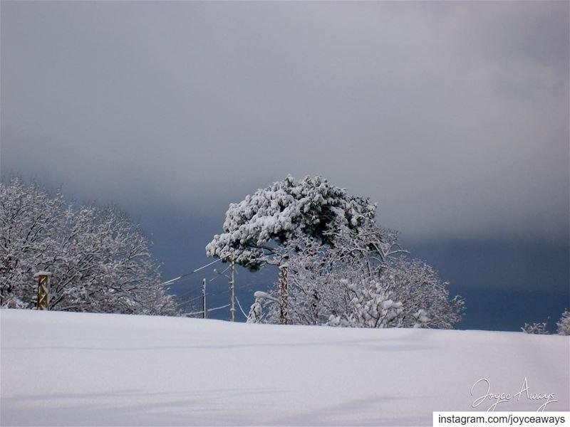 White Blanket ❄️🌨🌳⛄️.. chemlan shimlan lebanon village lebanese ... (Chemlane, Mont-Liban, Lebanon)
