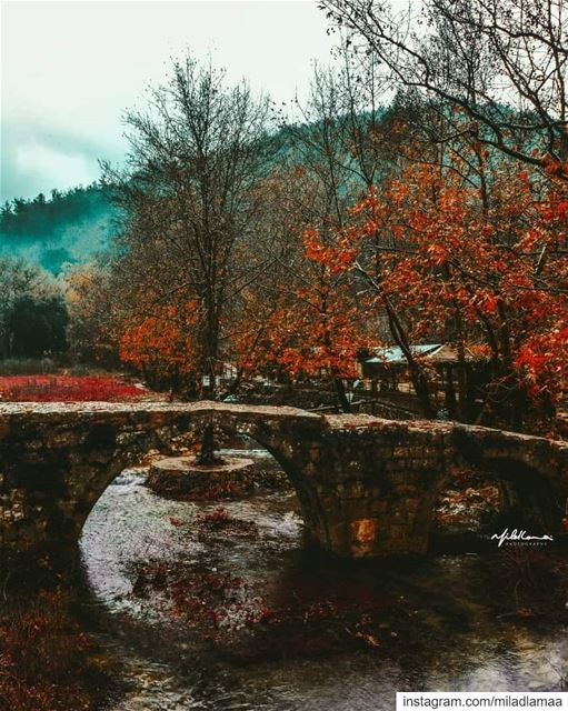 © Milad Lamaa | Autumn has come | 2018 autumn autumncolours ...