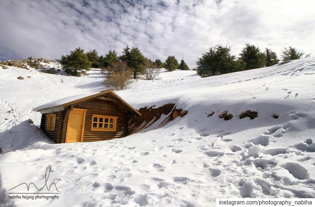Arz al-chouf cedars chouf mountains sky walk photography Lebanon ...
