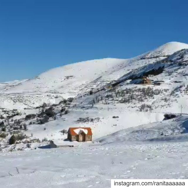 Snowshoeing in Tannourine reserve lebanonspotlight ptk_lebanon ... (Arz Tannoûrîne)
