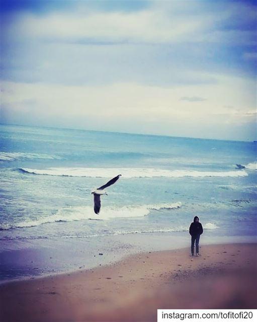 seaside visitsaida livelivesaida homesweethome lark me love landscape ... (صيدا الكورنيش البحري)