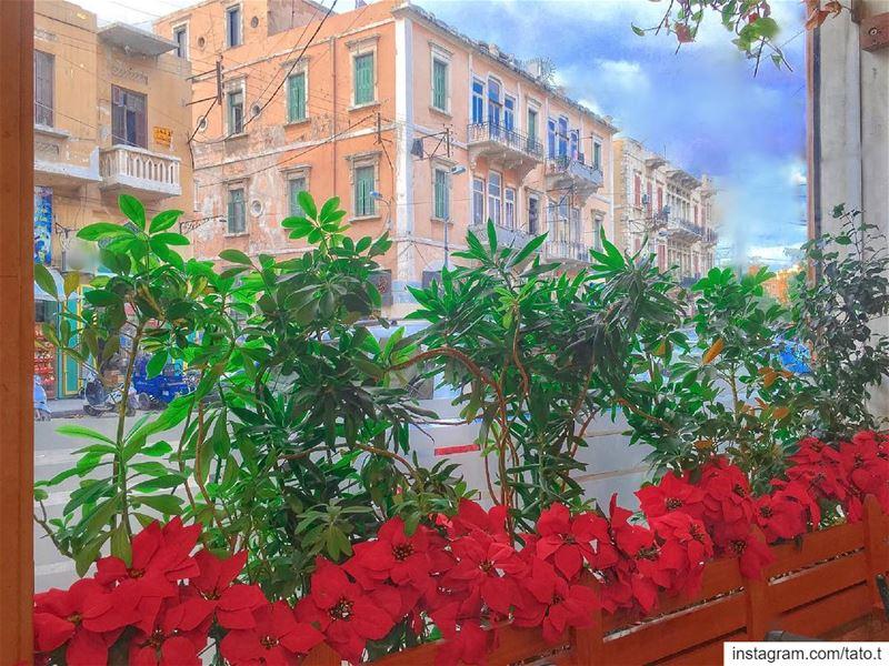 ✨🌹𝑪𝒉𝒓𝒊𝒔𝒕𝒎𝒂𝒔 𝑴𝒐𝒐𝒅 𝒊𝒏 𝑫𝒊𝒇𝒇𝒆𝒓𝒆𝒏𝒕 𝑽𝒊𝒃𝒆𝒔🌹•~•~•~• (Tripoli, Lebanon)