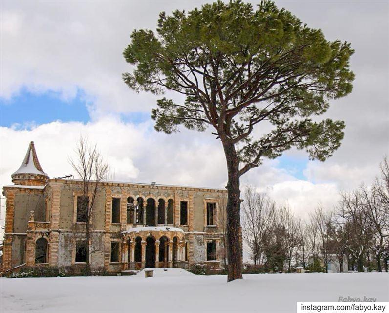 ================================ libanon sawfar snowday house tree... (Donna Maria Sursock Gardens)