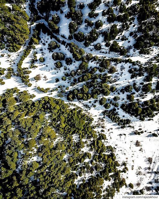 Shadow 201 🌲!.. dji ainzhalta lebanon.... moodygrams natgeo ... (Al Shouf Cedar Nature Reserve)