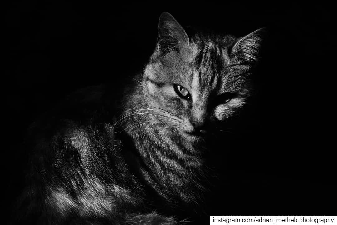 Into the darkness 🖤 cat cats socialsteeze catsagram catstagram ... (El Bireh , Akkar)