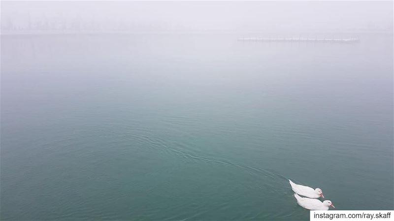 Fog and swimming ducks‼️................... lebanon ... (Fog Lake)