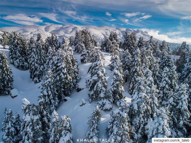 بعد جلاء العاصفة، بسط الأبيض سيطرته على المرتفعات ورؤوس الأشجار راسماً أجمل