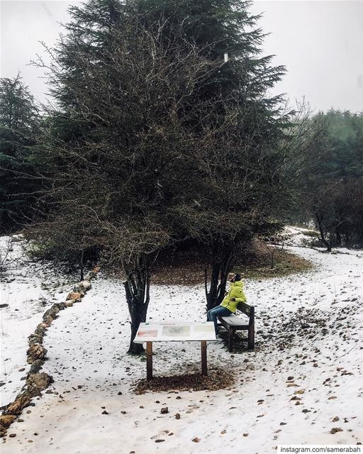 Let it snow ❄️ .......... snow mountains shoufresereve track ... (Al Shouf Cedar Nature Reserve)