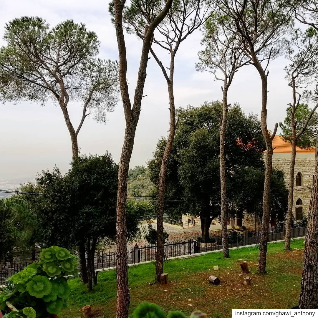 من بوستات اخر السنة🌳😌_______________________________ new post nature... (Mount Lebanon Governorate)