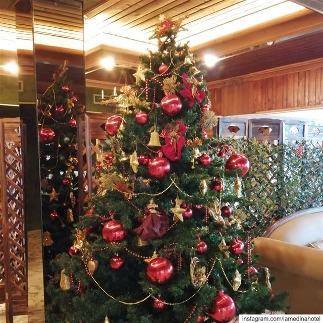 🌲Christmas is loading... May the warmth of Christmas fill your hearts💕 ... (Lamedina Hotel, Beach Club & Resort)