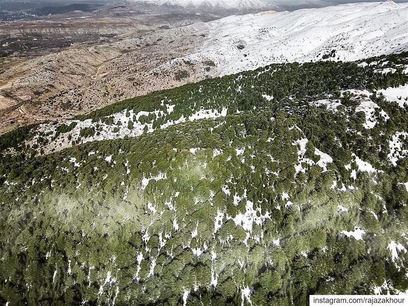 Natural Reserve! .. dji ainzhalta lebanon.... moodygrams natgeo... (Al-Shouf Cedars Natural Reserve)