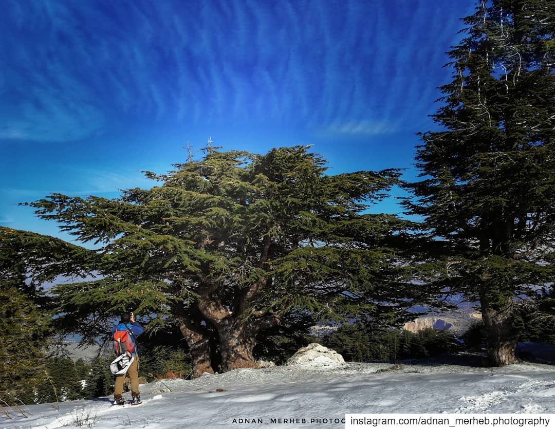 White akkar 😍❤️ snow snowing winter socialsteeze cold ice white ... (محمية كرم شباط)