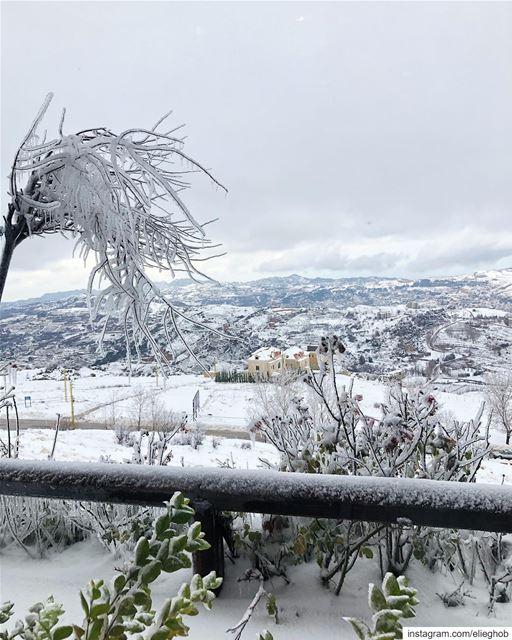 White morning❄️ saturday snow ... (Fakra Kfarzebian Liban)