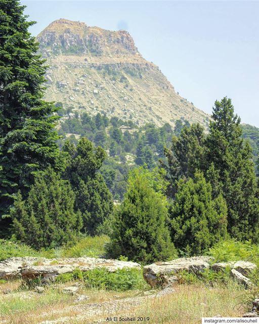 tb northlebanon akkar trees mountain forest Instadaily HDR ... (El Qammoûaa)
