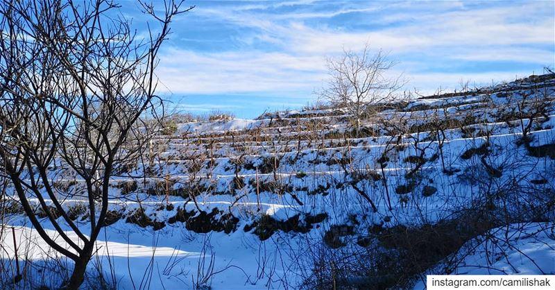 snow lebanon marcharbel annaya nature sky trees winter... (مار شربل - عنايا)