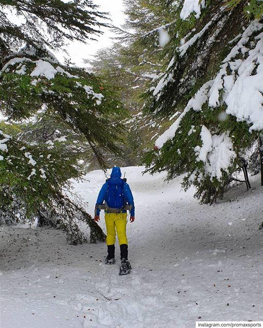 Let it snow 🍃💕.🌲🌲🌲🌲🌲🌲🌲🌲🌲🌲🌲🌲🌲🌲. promaxsports ... (Hadath El-Jubbah, Liban-Nord, Lebanon)