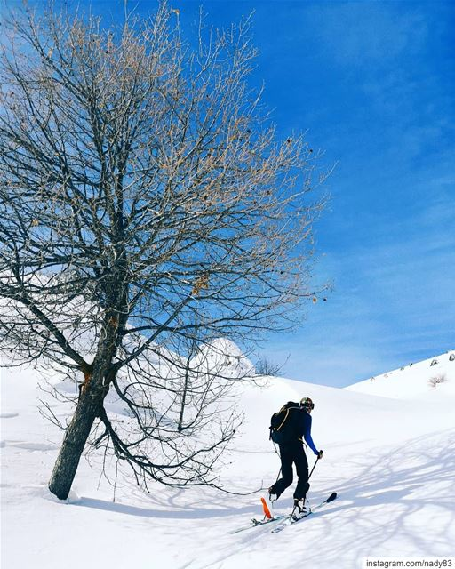 Hello tree 🎿.. backcountryskiing skitouring lebanon snow ski ...
