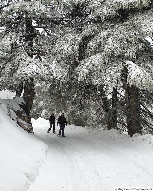 🌲🌲🌲🌲🌲🌲🌲🌲🌲🌲🌲🌲🌲🌲 promaxsports snowshoeing ig_lebanon ... (Bâroûk, Mont-Liban, Lebanon)