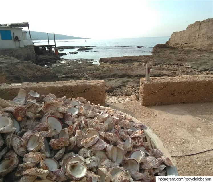 Seaside living in the oldest inhabited city in the world.. with plastic on... (Phoenician Wall)