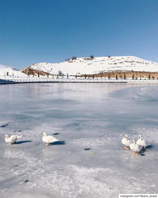 🇱🇧🇧🇷 Caminhando pelo lago congelado. Bela foto do @imuor tirada na... (Zaarour Club)
