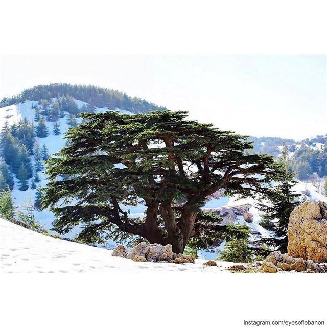 صباح الخير من أرز الباروكCredits to @f.rostom lebanon barouk chouf ... (Arz el Bâroûk)