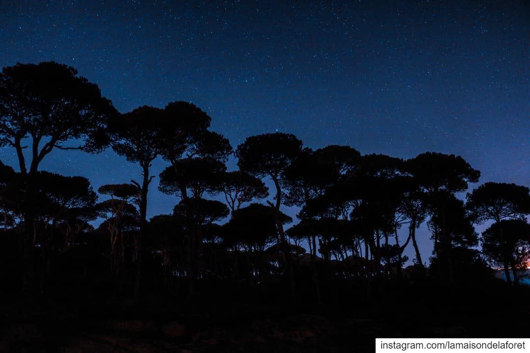 When it's dark look for 🌟🌟🌟 LaMaisonDeLaForet Resort Star Stars ...
