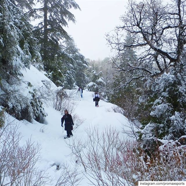 Join ProMax this Sun, Jan 20 to Ehden Reserve Snowshoeing.Info WhatsApp... (Horsh Ehden)