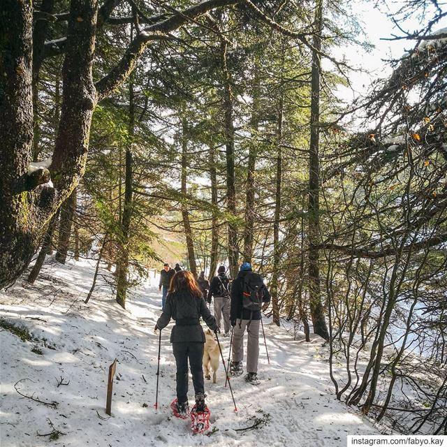 ============================ saturday libanon chouf cedars hikingculture... (Arz el Bâroûk)