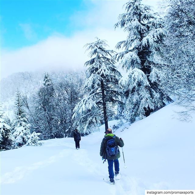 It is tomorrow Sun, Jan 20.Ehden Reserve Snowshoeing.Info WhatsApp or DM... (Ehden, Lebanon)