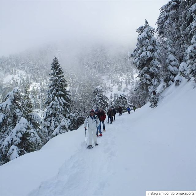 It is tomorrow Sun, Jan 20.Ehden Reserve Snowshoeing.Info WhatsApp or DM... (Horsh Ehden)