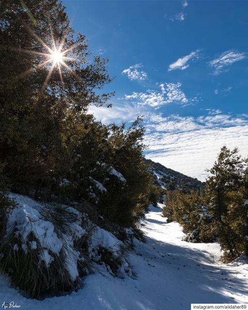 Have a lovely Sunday ☀️❄.... snow mountain paradise watershot... (Maaser El Shouf Cedar Reserve محمية ارز معاصر الشوف)