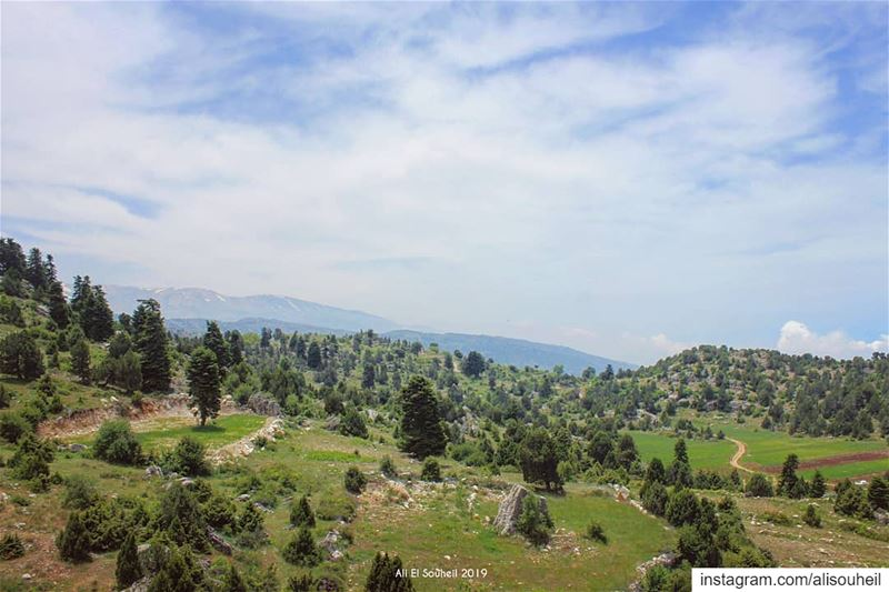 tb  akkar  forest  sky  northlebanon  clouds  mountains  trees   lebanon ... (Akkar)
