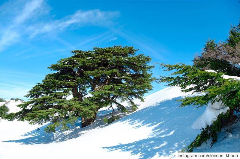 The Beautiful Lebanon's cedars 🇱🇧————————————•Fujifilm 📷Sleiman... (Bâroûk, Mont-Liban, Lebanon)
