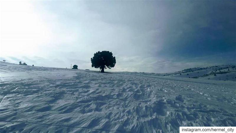 يــا شجـرة الإيــام غـيـرنـا الـهــوا ياناطـرة وحـدك علـى مهـبّ الـهـوا متل (El Hermel, Béqaa, Lebanon)