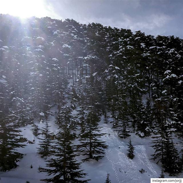 First light... ☀️🏔️🌲❄️..... Lebanon Cedars cedartree ... (Bmahray, Mont-Liban, Lebanon)