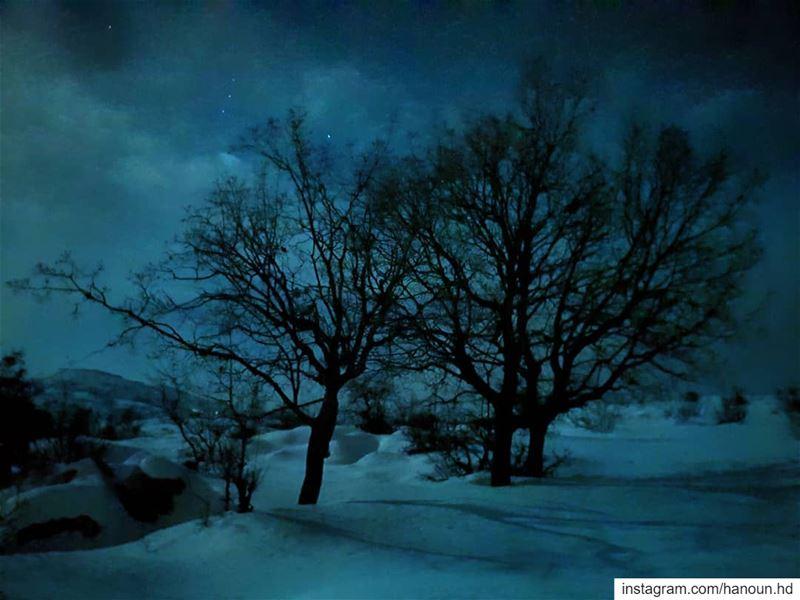 livelovelebanon livelovetarchich snow snowshoeingnight tree moon ... (Mount Sannine)