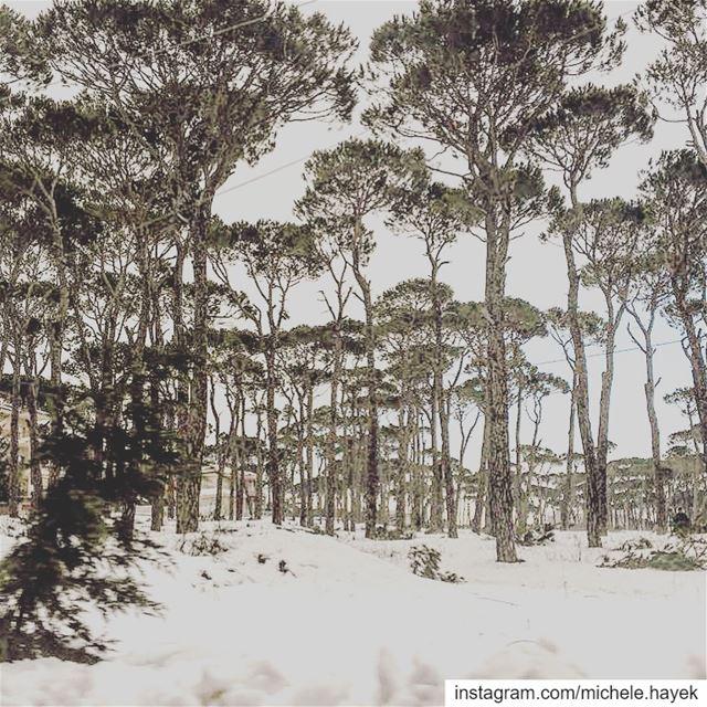 Winter F❄️rest🖤 naturephotography landscapephotography paysage snow ... (Lebanon)