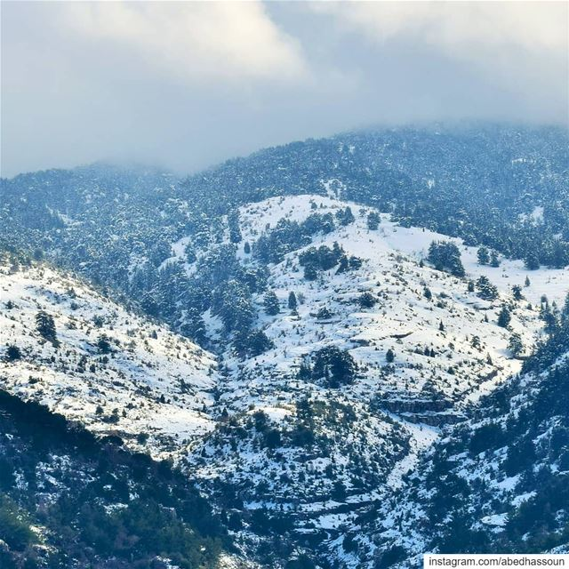 My kind of forests ❄🌲❄🌲❄.......... LiveLoveBcharri  قنات  ... (Qnât, Liban-Nord, Lebanon)