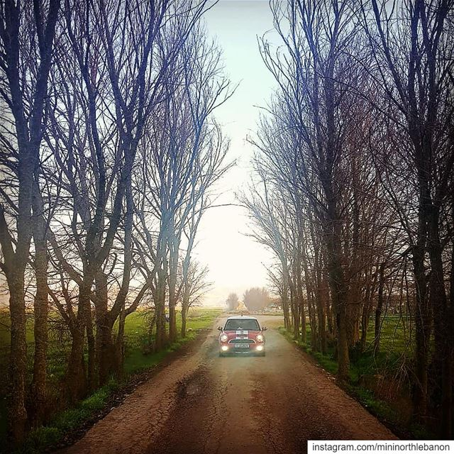@mouradaboumrad 👍♥️🇱🇧 mininorthlebanon mini minicooper red forest ... (`Ammiq, Béqaa, Lebanon)